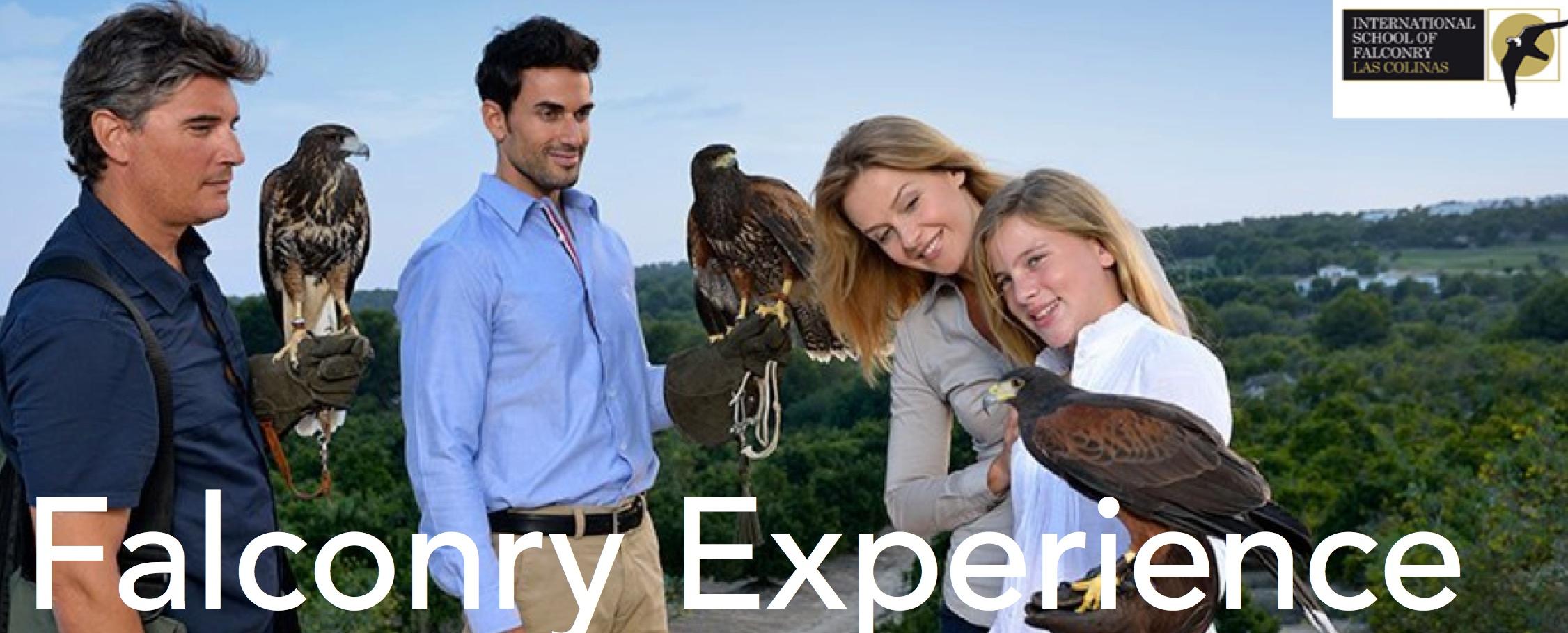 Falconry experience Las Colinas